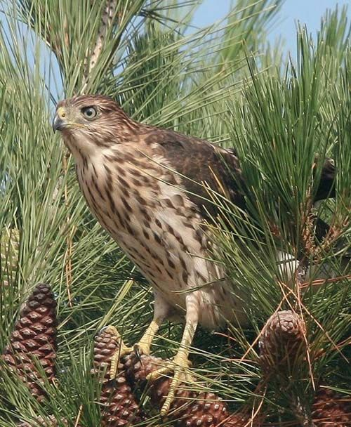 Birdwatching in and around Coachella Valley - DesertUSA: A guide ...