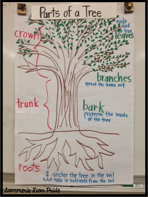Sommer's Lion Pride: Trees, Trees, and Trees! pictorial input chart on trees- GLAD strategy