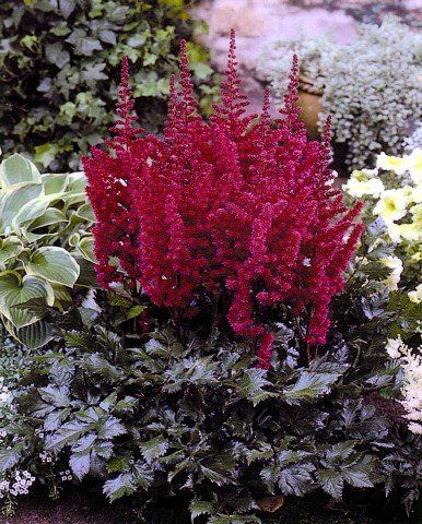 345 besten pflanzen ziehen pflegen vermehren bilder auf pinterest gartenpflanzen gepflegt. Black Bedroom Furniture Sets. Home Design Ideas
