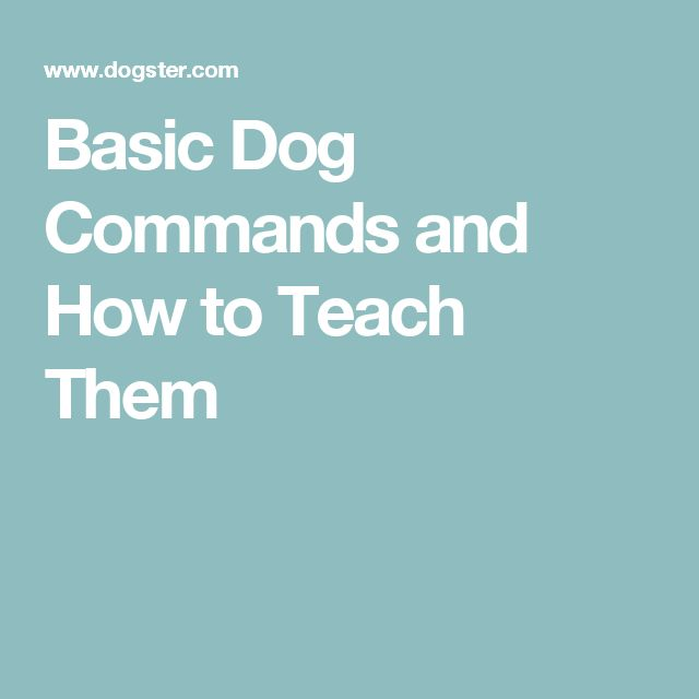 Basic Dog Commands and How to Teach Them