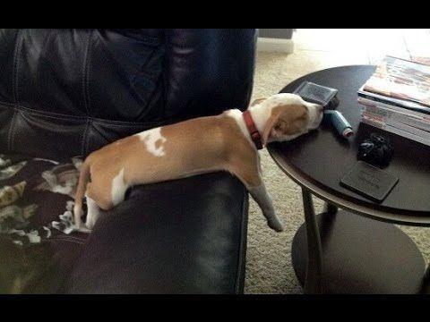 Los mejores vídeos de perros durmiendo, ¡te vas a reir!