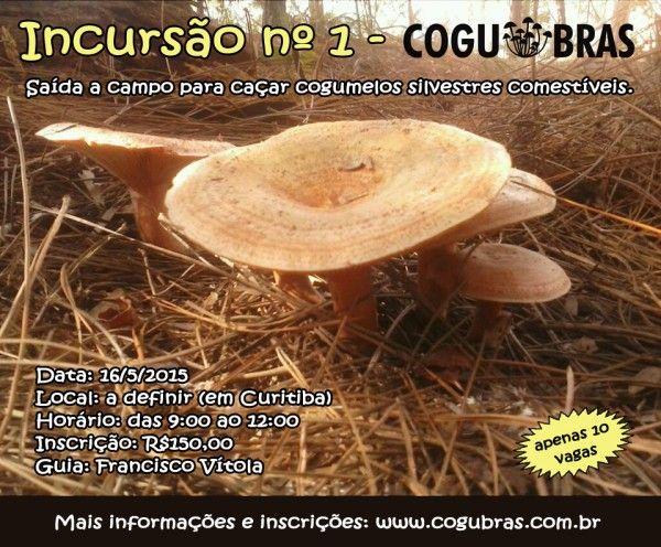 Incursão para Caçar Cogumelos Silvestres Comestíveis - Receita de Viagem