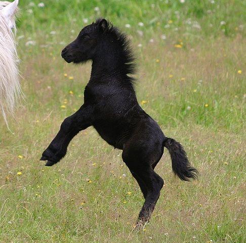 Mini foal that's way bigger than everyone else!