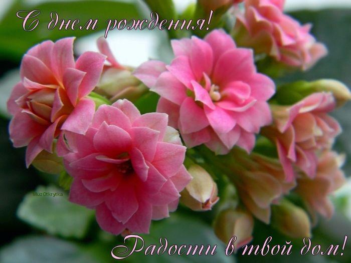 Красивые картинки с днем рождения женщине цветы картинка номер 9