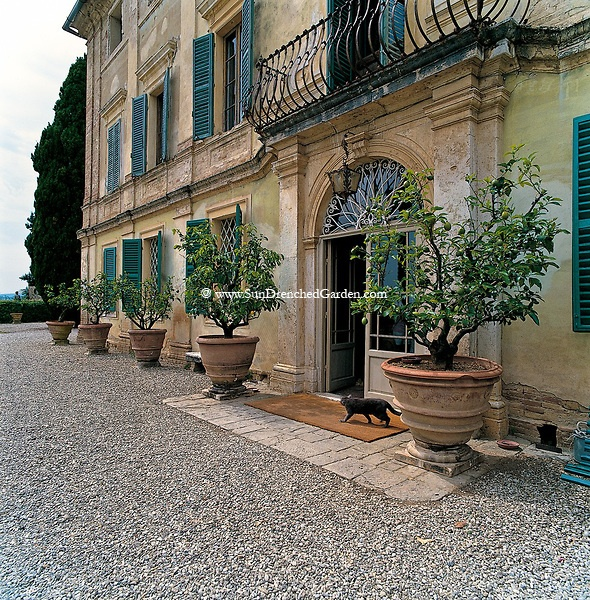 Tuscan House Style With Front Walkway And Italian Cypress: 7 Best Images About Italian Villa Style On Pinterest