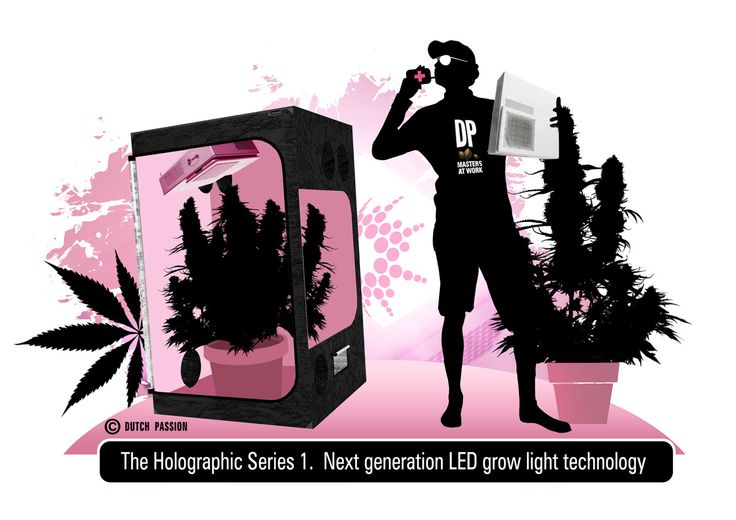 Dutch Passion are proud to announce our new high performance LED grow light, the Holographic Series 1. And we are so confident about the future of the LED grow light business that a new company to specialise in LED has been created, the new company is called 'Crazy LEDs & More'.   The Holographic Series 1 is designed and manufactured in the EU by our technology partner GrowNorthern who have several years experience designing LED grow lights.