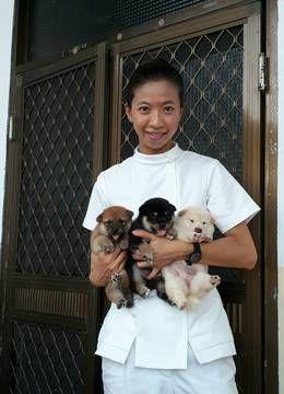 Shiba Inu puppy for sale in LOS ANGELES, CA. ADN-54519 on PuppyFinder.com Gender: Male. Age: 10 Weeks Old