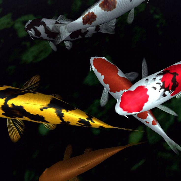 82 best images about koi karpers on pinterest carp for Garden state koi
