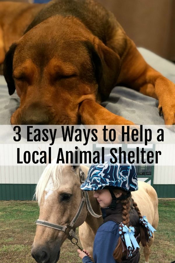 3 Simple Ways To Help A Local Animal Shelter Animal Shelter Shelter Shelter Dogs