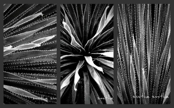 black and white series fine art nature photography by boots2183, $20.00