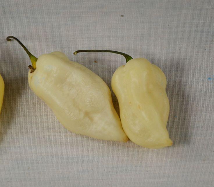 White Bhut Jolokia Pepper Seeds + FREE Bonus 6 Variety Seed Pack - a $30 Value!