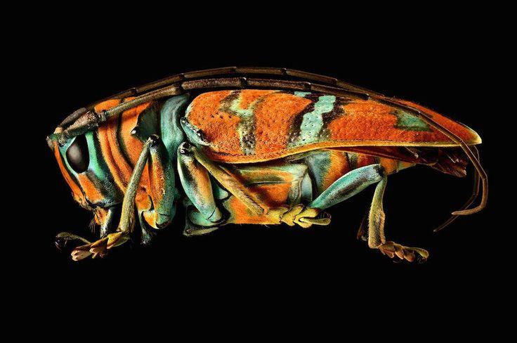 Le photographe commercial Levon Biss s'attache à reproduire d'une façon extrêmement précise les détails de la collection d'insectes du museum d'histoire naturelle d'Oxford.