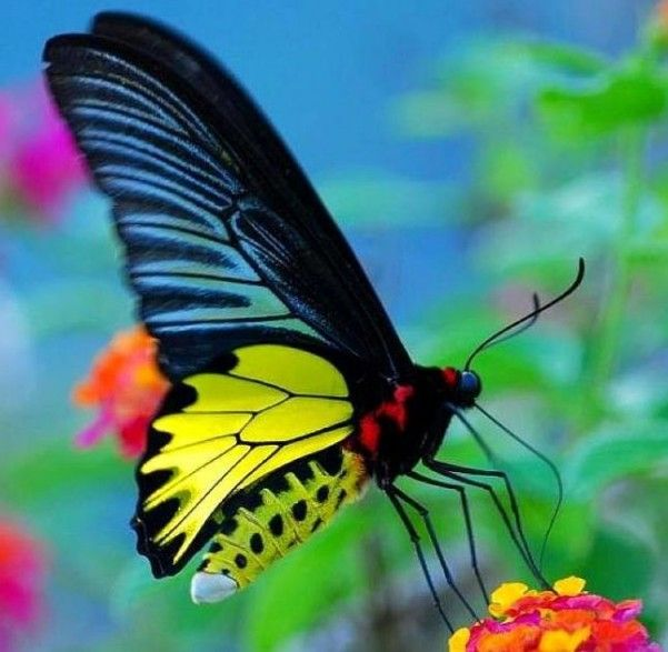 Beautiful Butterflies Beautiful Butterflies Butterfly Live Butterfly