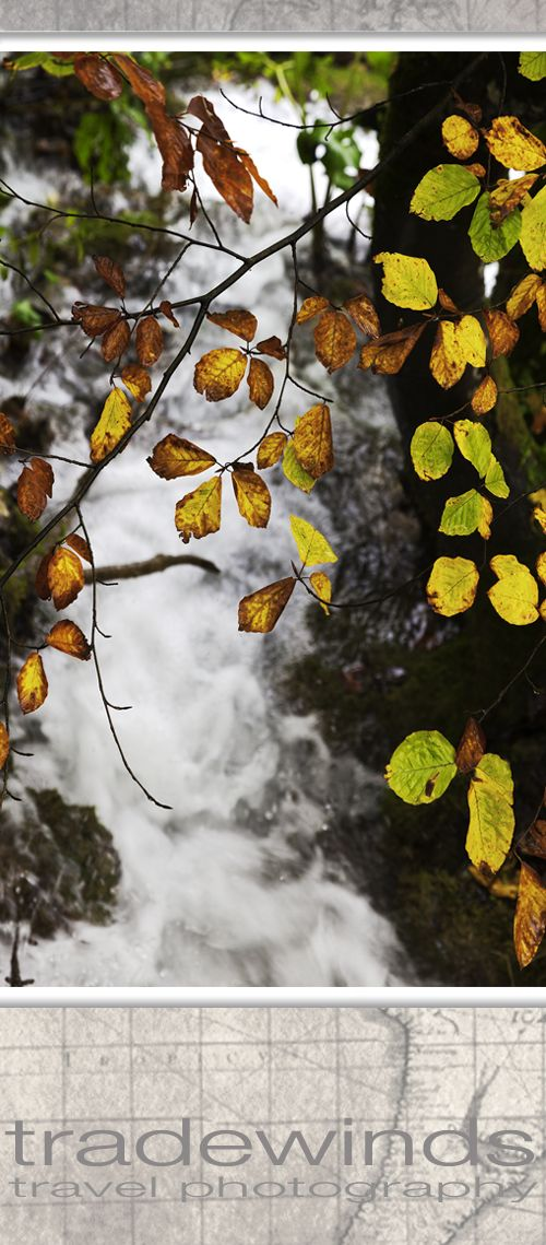 Bright leaves hang over a small waterfall in Plivice national park in Croatia.