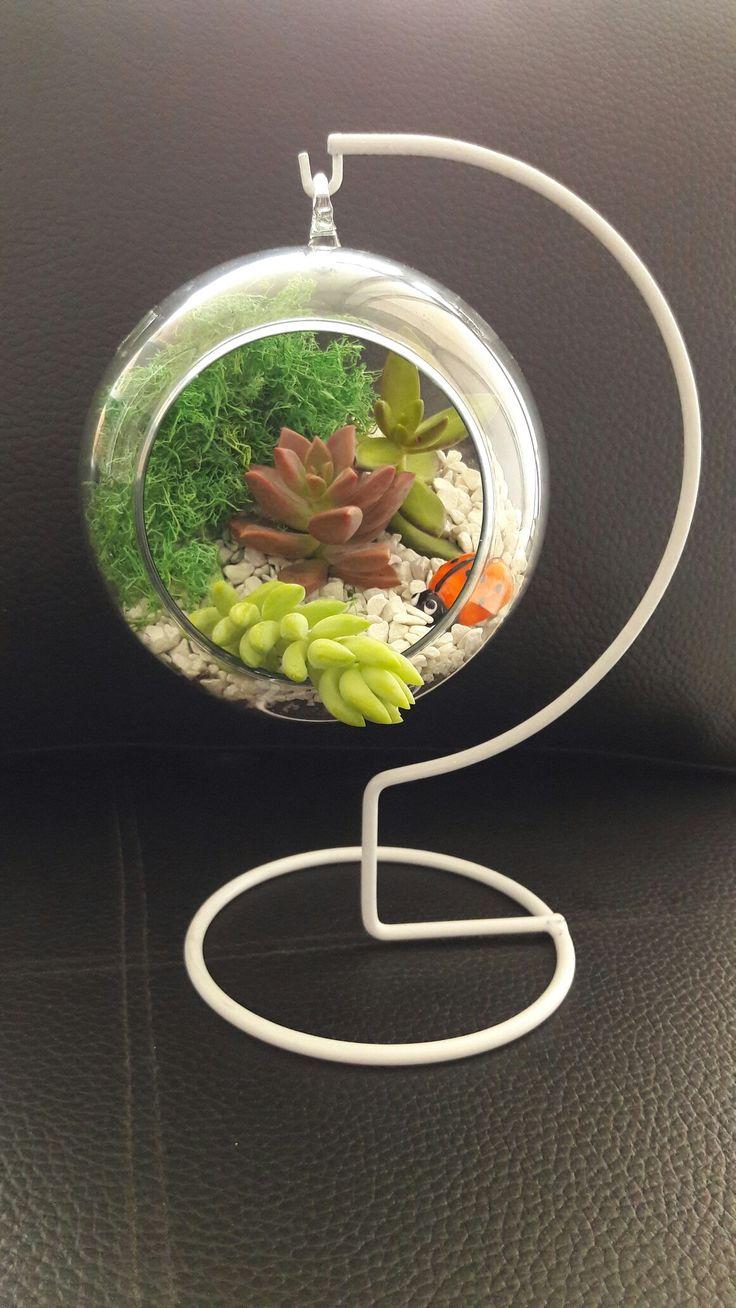 Succulents arangement idea. Glass baloon terrarium. Ideas para un terrario de suculentas.