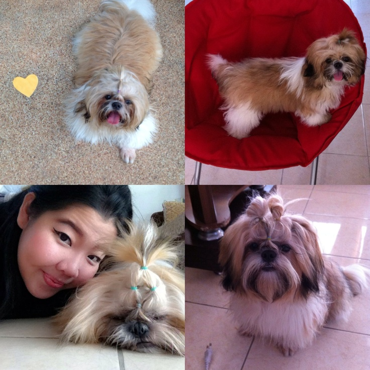 Jelly : This is my Shih-Tzu dog. It's a male name is Koko. It was one year and two month. I miss it so much.