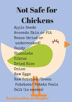I am constantly tempted to feed our chickens table scraps. I hate throwing things in the trash, so it seems logical to me that I can divert some of our half-eaten meals to the ladies in the backyar…