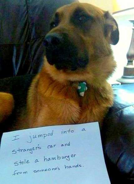 Dog Shaming | Funny Dog Photos