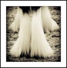 horses feathers
