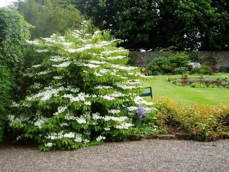 68 best images about gardens open for charity on pinterest for Garden trees scotland