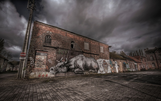 This Is A Load Of Bull / ROA | Flickr - Photo Sharing!