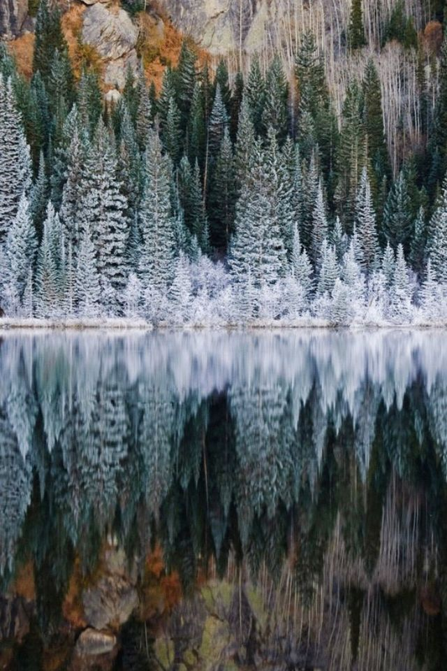 I love how stunning the trees look when they are reflected in water. It almost…