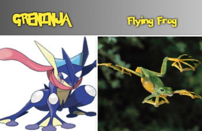 GRENINJA flying frog