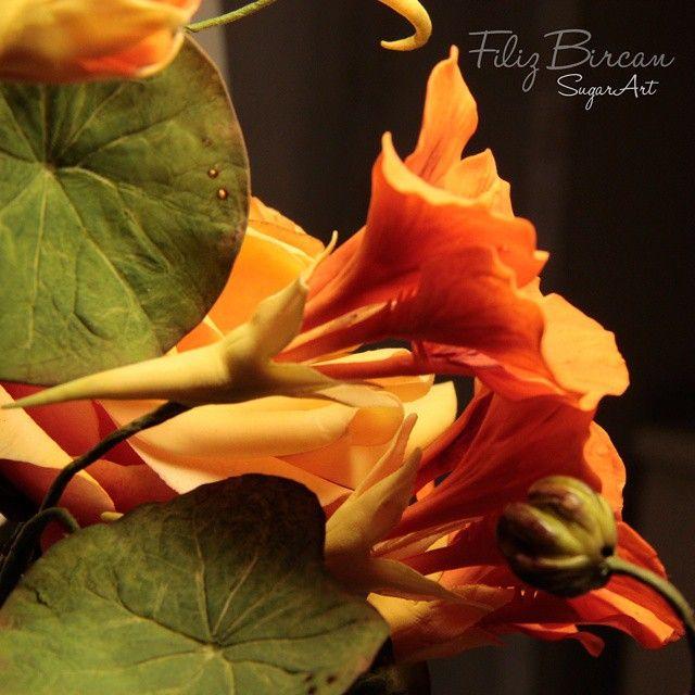 {Gorgeous tangerine-orange Nasturtiums by Filiz Bircan}