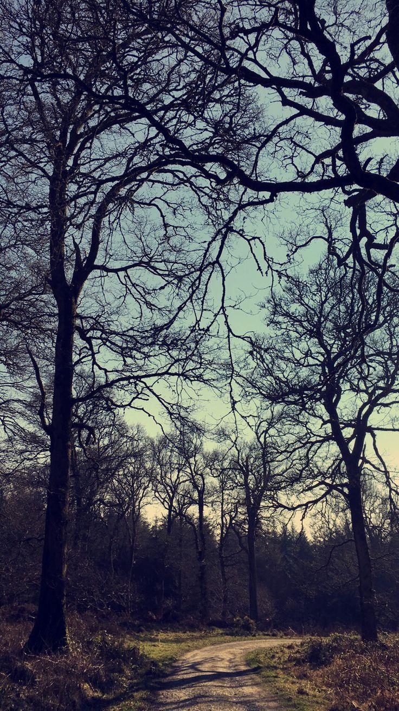 Trees ©karenmiley
