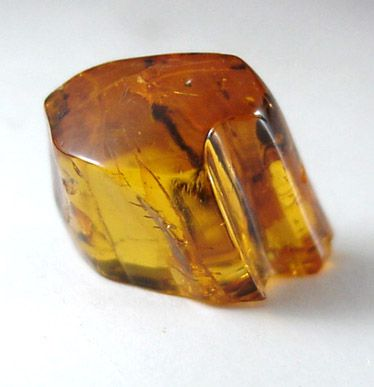 Amber from Baltic Sea, near Gdansk, Poland