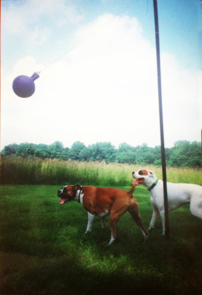 Old Laundry Line Or Fence Pole Tether Ball For Your Dog