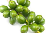 6 Health Benefits of Green Coffee Bean Extract (chlorogenic acid). Green coffee bean extract has become popular weight loss supplement after being recommended by Dr. Oz and many others, but weight loss is not its only benefit. Here are 6 health benefits of green coffee bean extract.  http://www.healthdiaries.com/eatthis/6-health-benefits-of-green-coffee-bean-extract.html