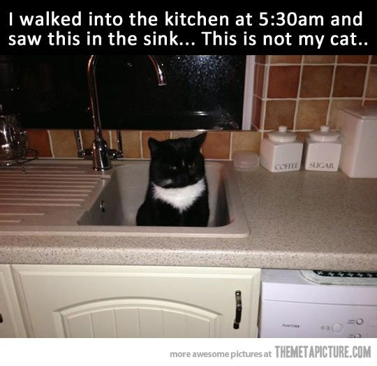 This is not my cat… hahah