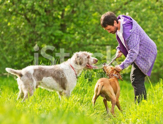 young man playing with dogs royalty-free stock photo