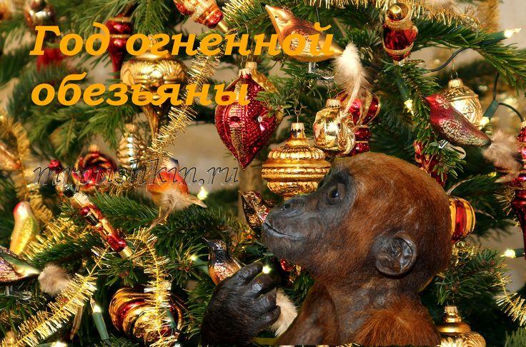 На протяжении двенадцати лет обезьянка ждала свой черёд и вот-вот она станет полноправной хозяйкой этого года. Прощаясь со спокойной и в тоже время целеустремленной «деревянной козой» мы встречаем энергичную и искусную «огненную обезьяну».  Что же сулит нам этот год? Как положено его встречать? Что предпочитает видеть на столе «огненная обезьяна»? А что бы такое надеть, чтобы притянуть удачу в Новом году?