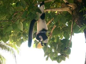 Workaway in Madagascar. Experienced Volunteers Requested for Eco-tourism in rural West Madagascar