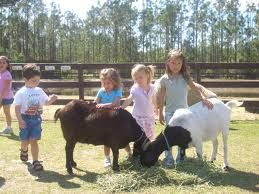 Petting Goats! Petting Zoos - rent barnyard animals for petting zoo - Irvine, Riverside, LA, Orange County, Santa Ana, and San Clemente surrounding areas!