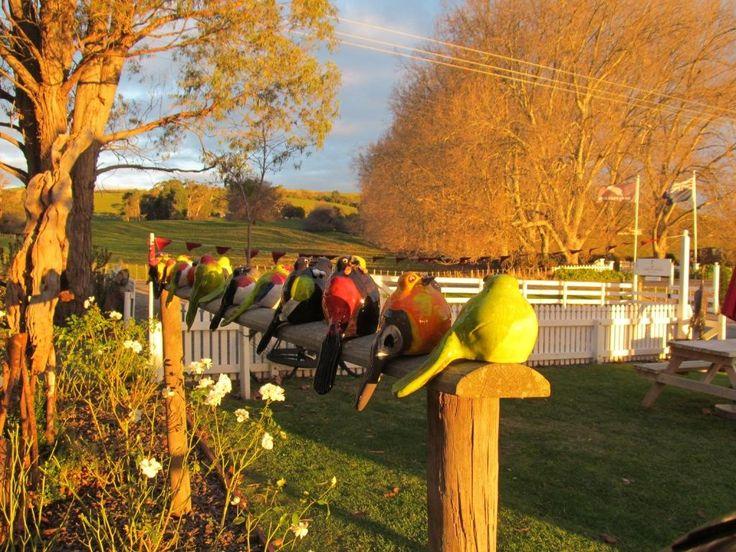 Birds on display outside Birdwoods Gallery.