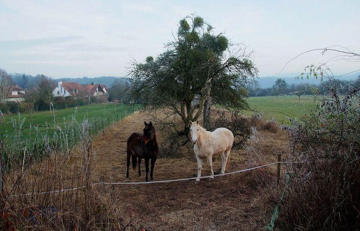 Und macht die Kälte wenig aus.  .... . sagten die Pferde auf der Koppel in der Nachbarschaft. Wir brauchen nur ausreichend Futter, genügend zu trinken und einen schützenden Unterstand.