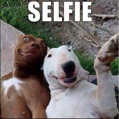 Human selfies look like this ! / Les selfies des humains ressemblent à cela !