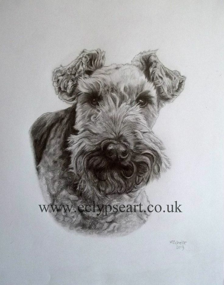From Michelle a pencil drawing of Holly