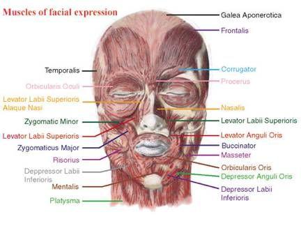 Tic facial o muscular