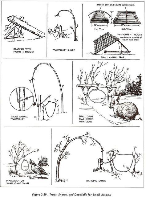 snares and traps- Everyone should know this and about the edible plants (and be able to make a positive ID of those plants if in doubt it's best not to use).