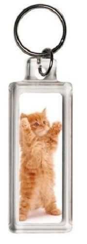 'Big hug' ginger kitten cat keyring  | eBay