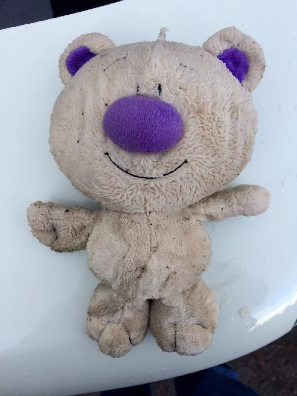 Found on 27 May. 2016 @ 169 Beech Forest-Mount Sabine Rd, Victoria. I found this little guy in the middle of the road just east of Beech Forest, Vic. He's got a tummy full of cherry stones or something similar, so I guess someone would like to have him back to take... Visit: https://whiteboomerang.com/lostteddy/msg/yoqdzd (Posted by Achim on 01 Jun. 2016)