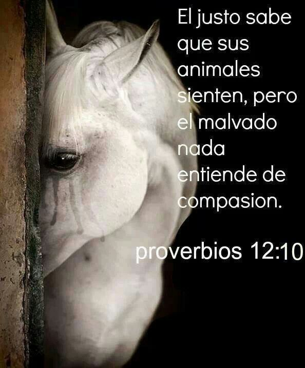 Proverbios 12:10 - The godly know what their animals feel, but the wicked know nothing about compassion.