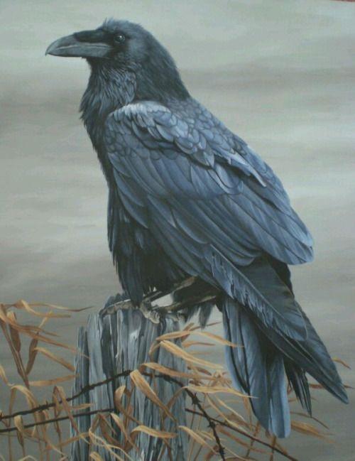 Big beak...Raven ..bigger bodies and fewer than crows.
