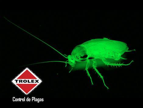 Las cucarachas son insectos detestados por la mayoría; su aspecto y hábitos no las hacen menos repugnantes y tienen la capacidad de insertarse en casi cualquier espacio humano. Hay muchos mitos sobre la capacidad de estos insectos a la radioactividad.