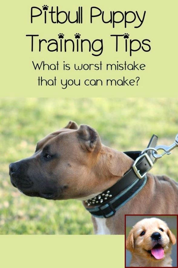 Dog Behavior Specialist Near Me And House Training A Puppy For