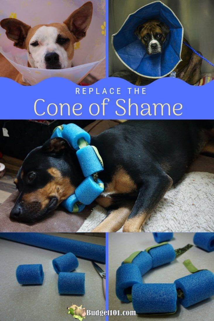 Replace The Cone Of Shame Dog Cone Dog Cone Collar Dog Cone